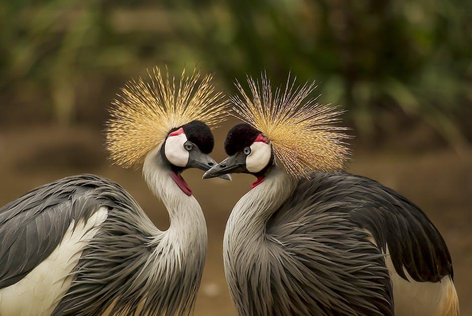 Nature bird love heart
