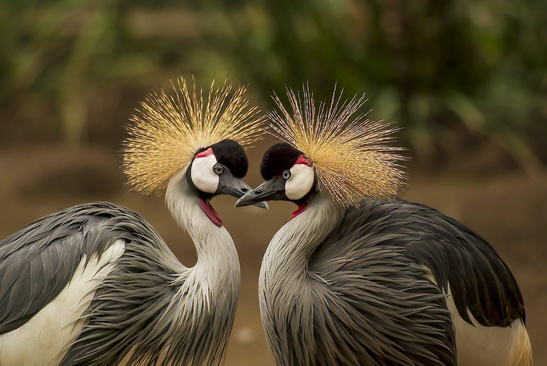 divočina, dvojica, elegantný