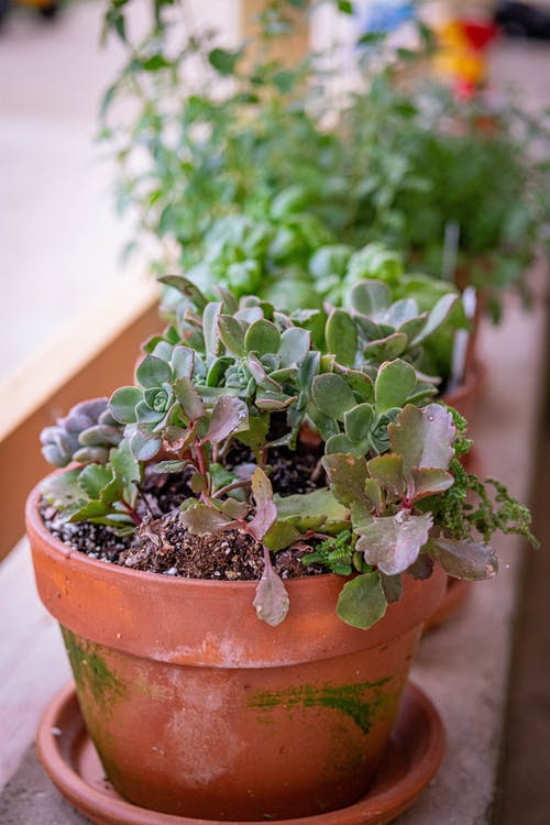 Free stock photo of clay pot, cute, garden