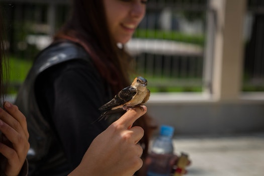 Free stock photo of person, bird, hands, street