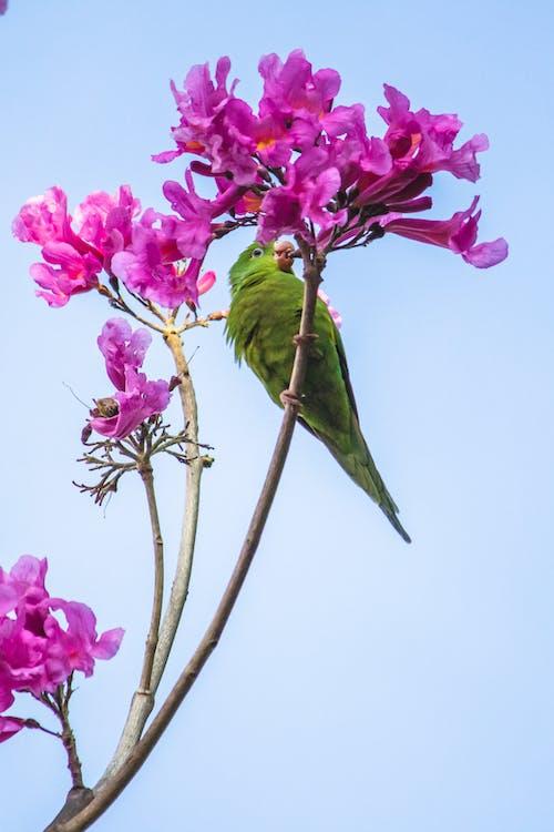Free stock photo of arbusto de florescência, observação de pássaros