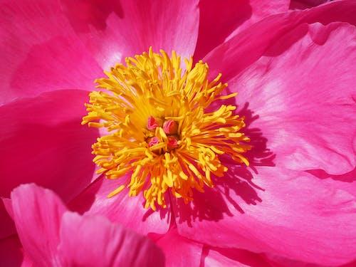 Fotobanka sbezplatnými fotkami na tému detailný záber, HD tapeta, kvet, kvet ovocného stromu