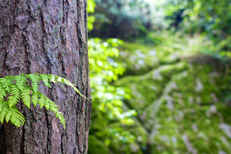 Green Leaves Beside Tree Bark Free Stock Photo