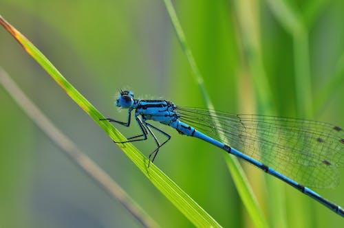 Darmowe zdjęcie z galerii z makro, owad, trawa, zbliżenie