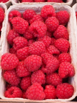 Red Raspberry on White Container