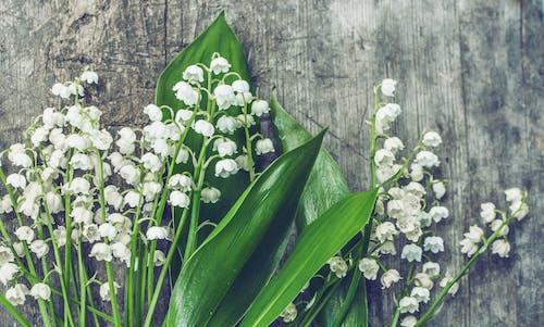 белые цветочки