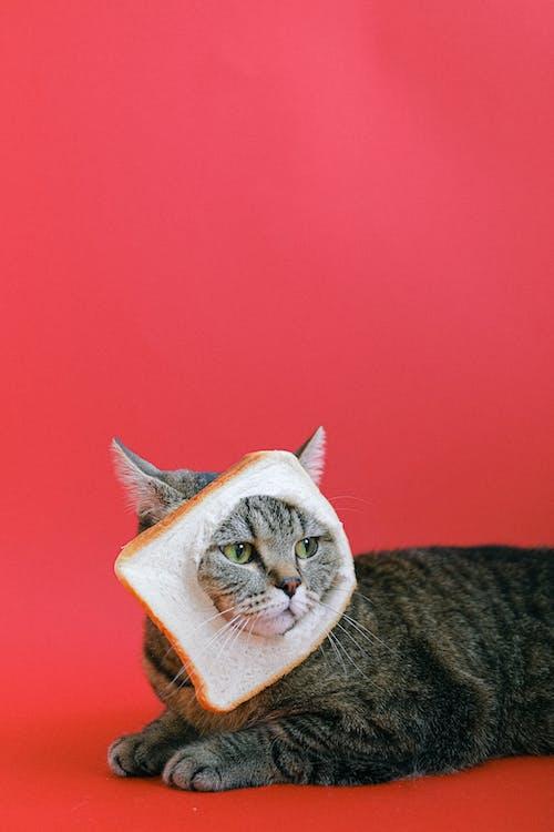 Immagine gratuita di alla ricerca, animale, animale carino