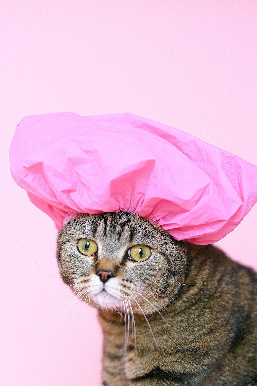 understanding cats behavior understanding feral cat behavior understanding cat behaviour do cats understand punishment understanding kitten behavior body language of cat understanding kitten behaviour