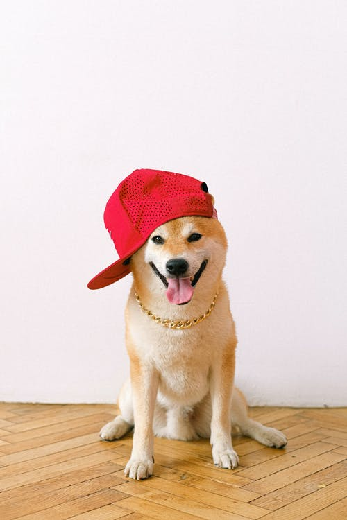 Yellow Labrador Retriever Wearing Red Hat