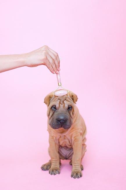Perché il massaggio del cane ?