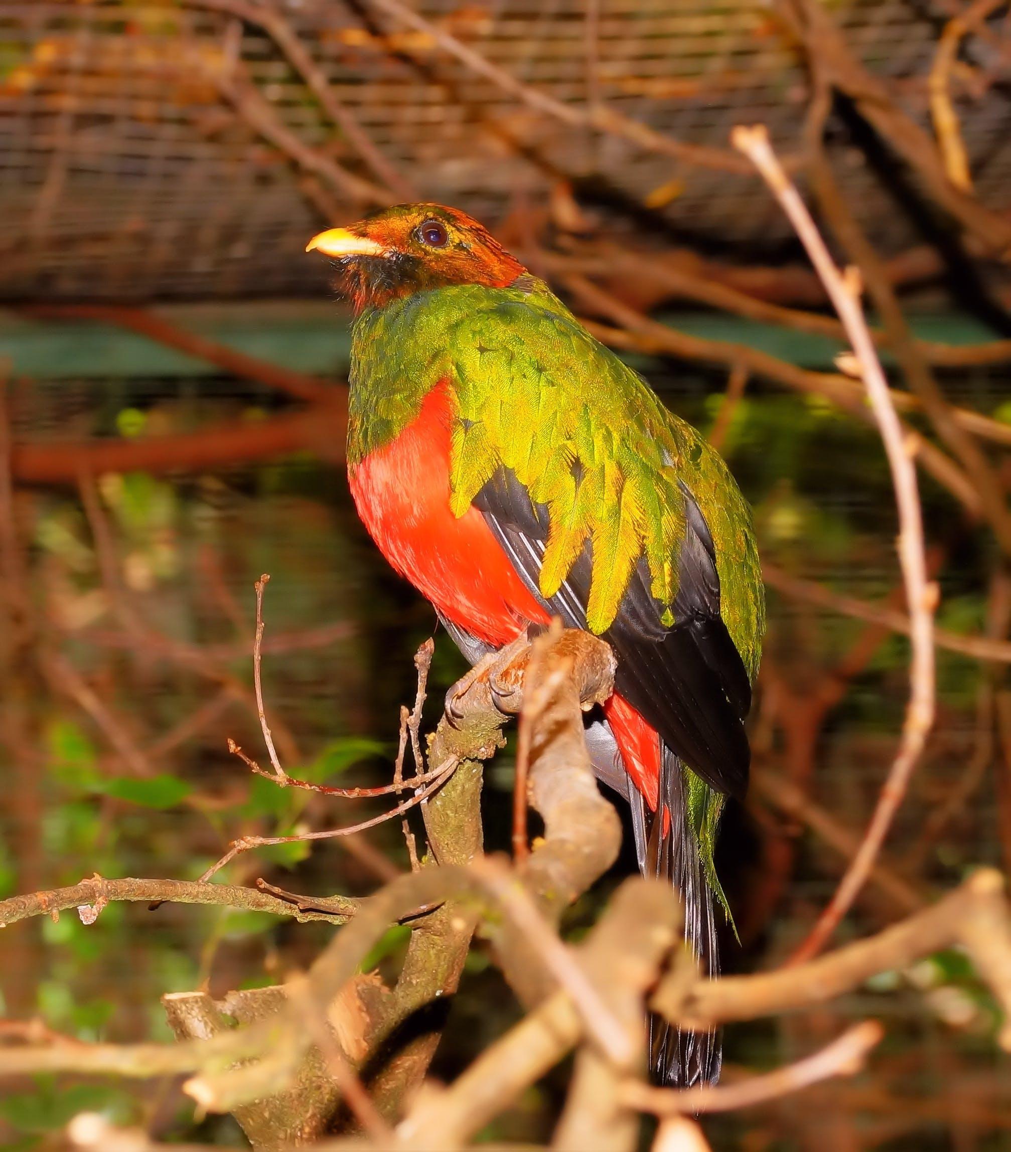 Free stock photo of nature, bird, animal, colorful