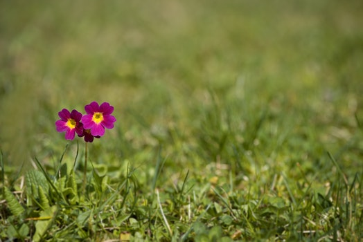 Free stock photo of nature, red, grass, meadow