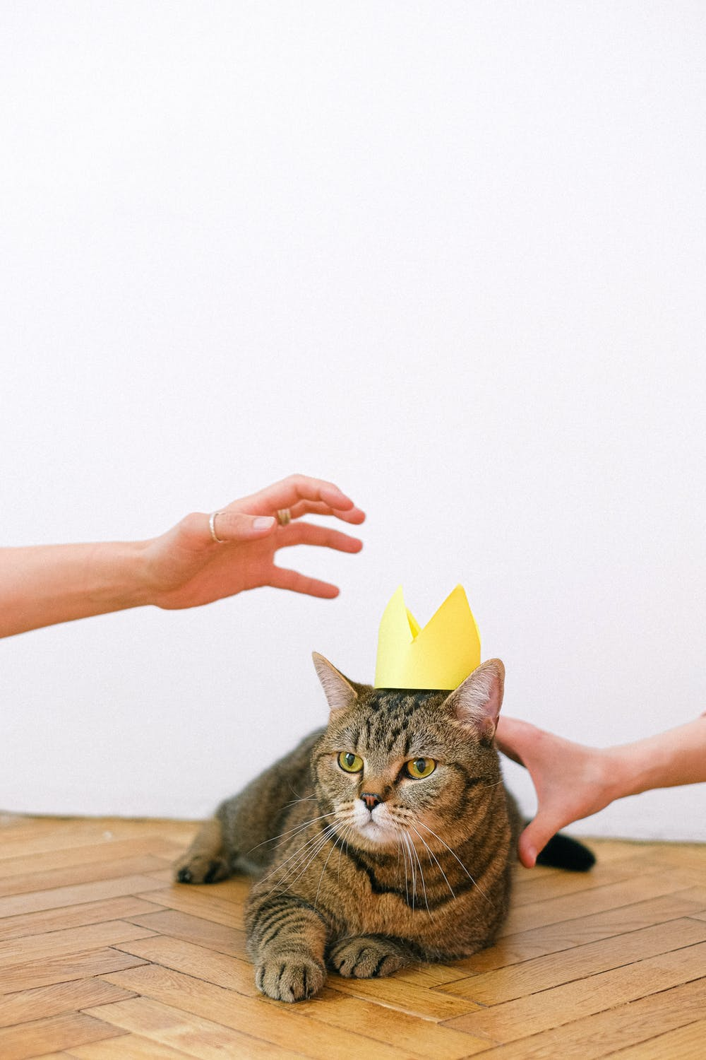 Pet Gifts Your Cat Will Probably Hate