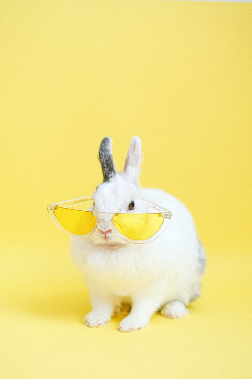White Rabbit Wearing Yellow Eyeglasses