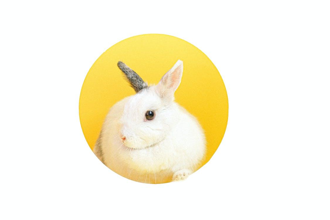 White Rabbit on Yellow Round Pad