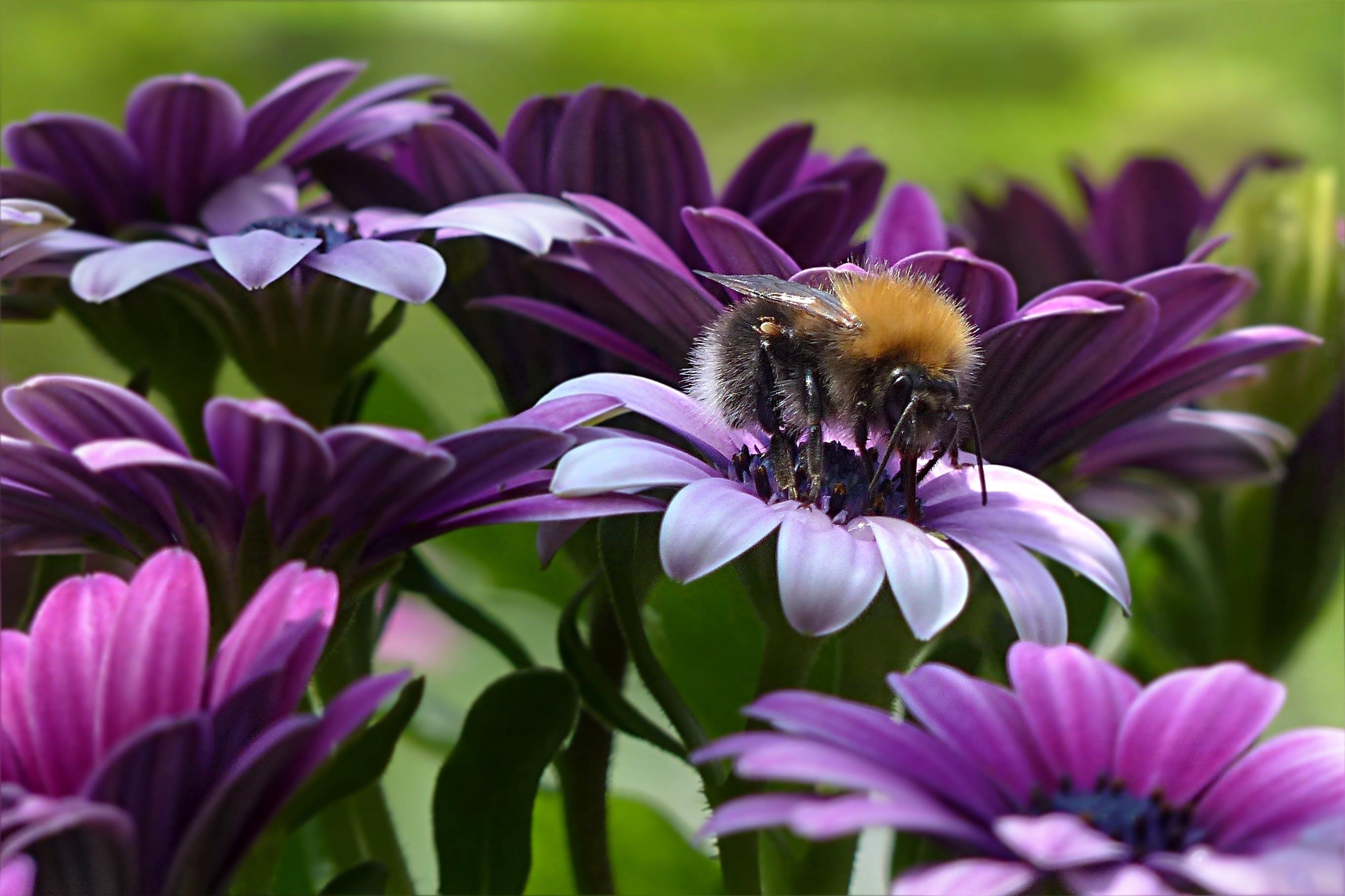 barva, fialová, hmyz