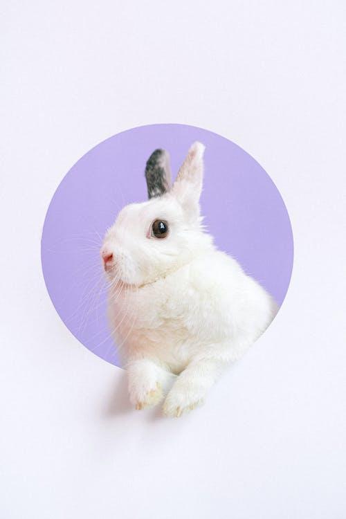 Portrait of Pet Rabbit
