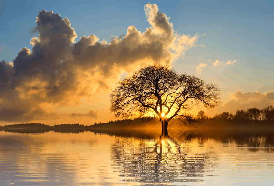 Landscape Photography of Tree and Body of Water