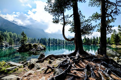 Green Trees Near Body of Water