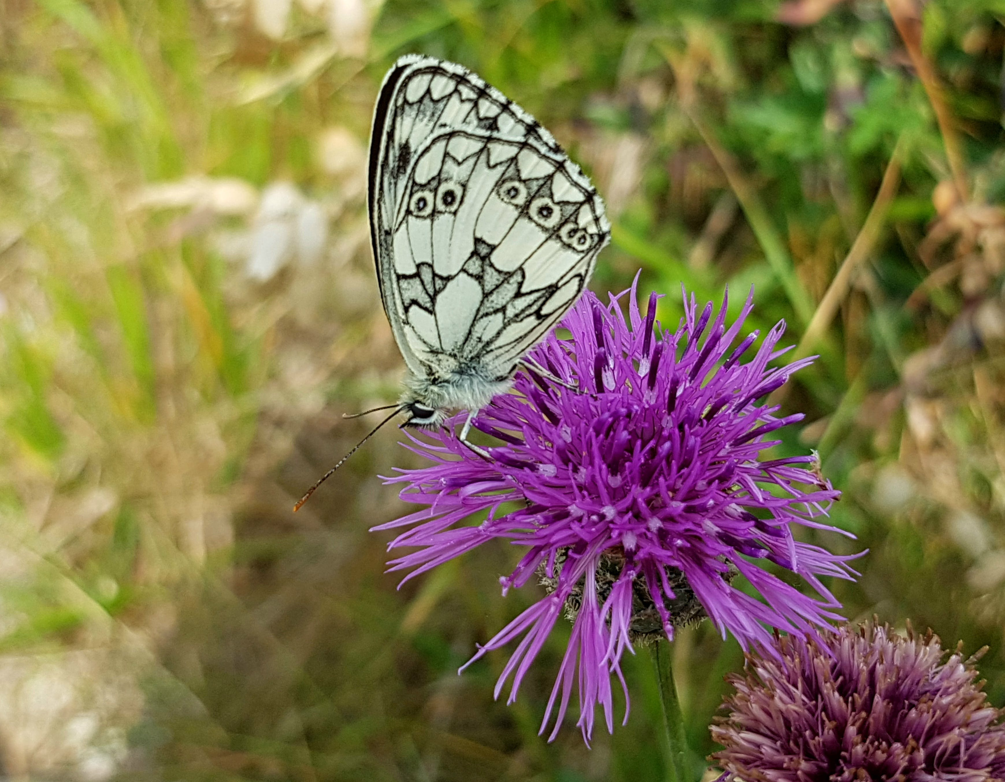 Free stock photo of nature, flower, insect, butterfly