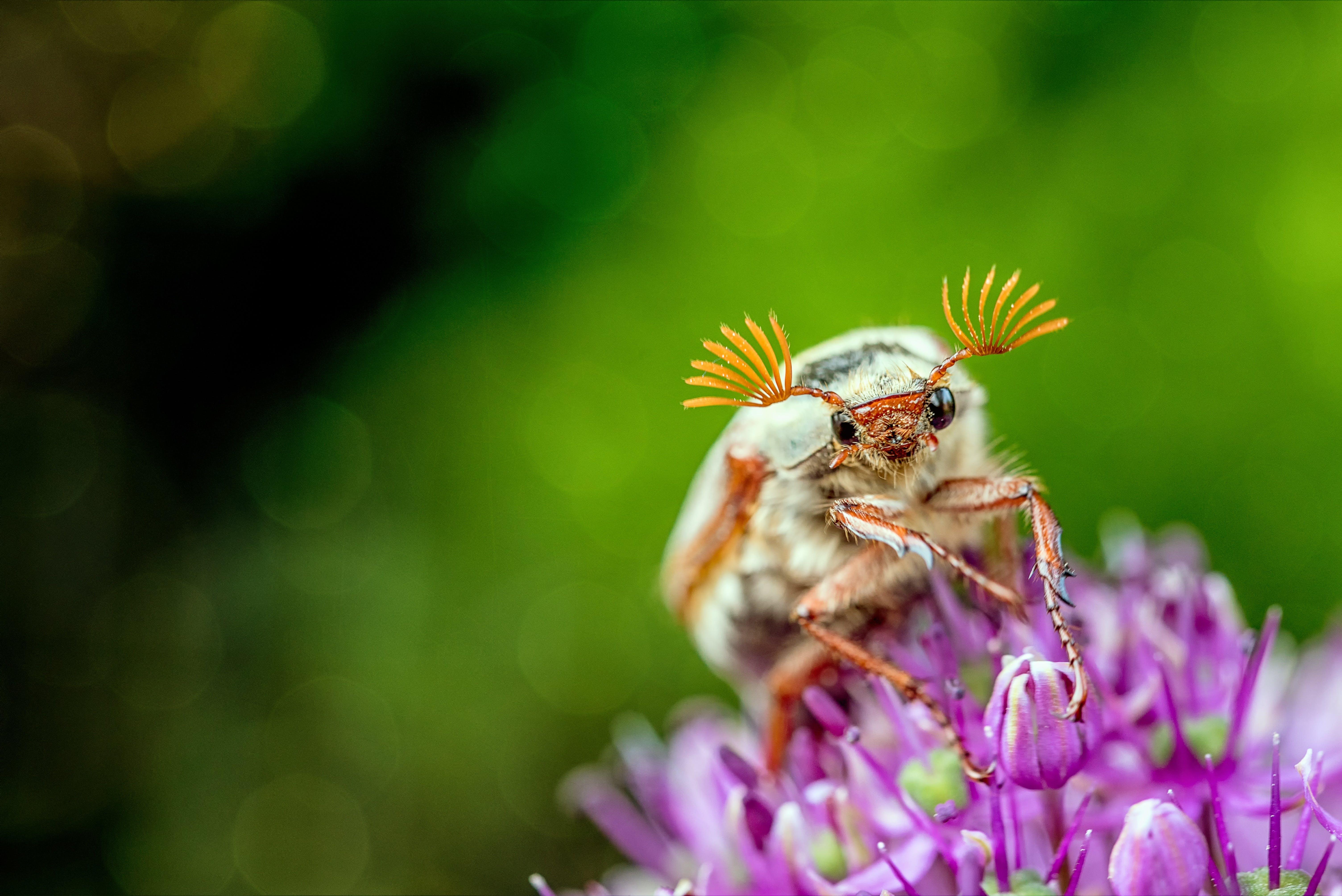 animal, beetle, bloom