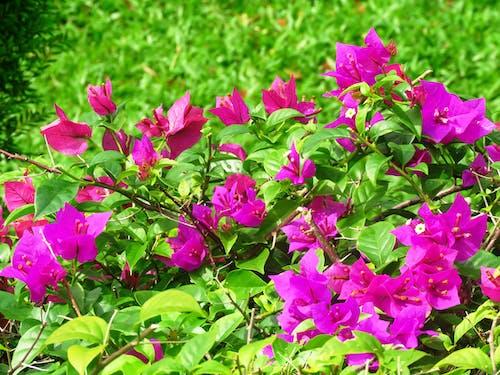 Gratis lagerfoto af blomster, blomstrende, Botanisk, close-up