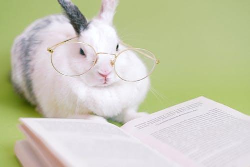 Copyspace, 兔子, 動物形象, 動物肖像 的 免費圖庫相片