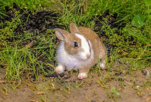 Free stock photo of animal, animal photography, animals, Animals And Pets
