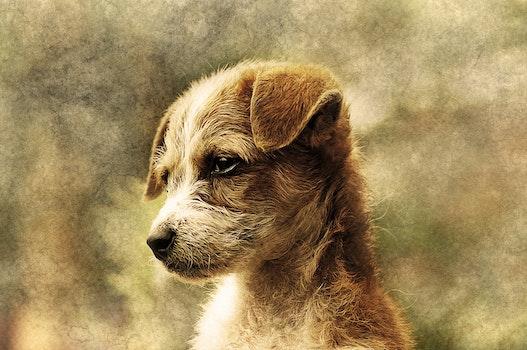 Free stock photo of art, animal, pet, fur