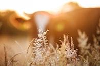 landscape, sunset, field