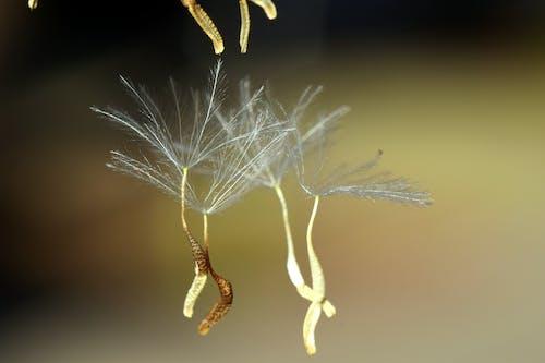 가벼운, 겨울, 곤충, 뜨다의 무료 스톡 사진