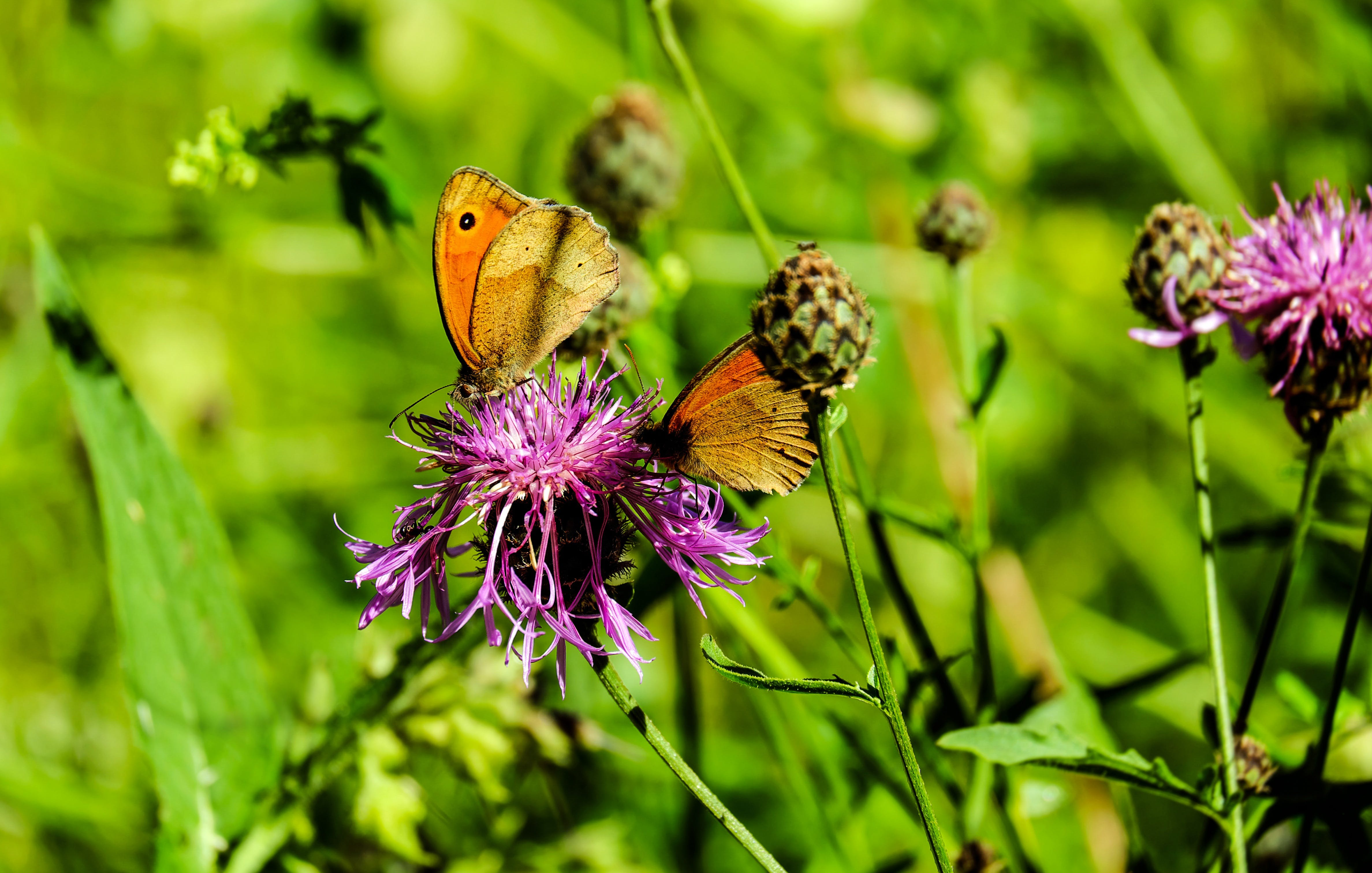 Gratis stockfoto met beest, bloemen, bloemknoppen, close-up