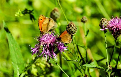 Fotobanka sbezplatnými fotkami na tému detailný záber, farba, flóra, hmyz