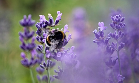 Free stock photo of nature, petals, blur, bee
