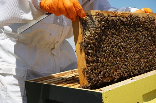 Person Holding Brown and Black Bee
