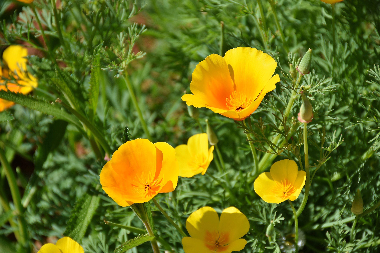 Kostenloses Stock Foto zu blühen, blumen, blumengarten, blüte