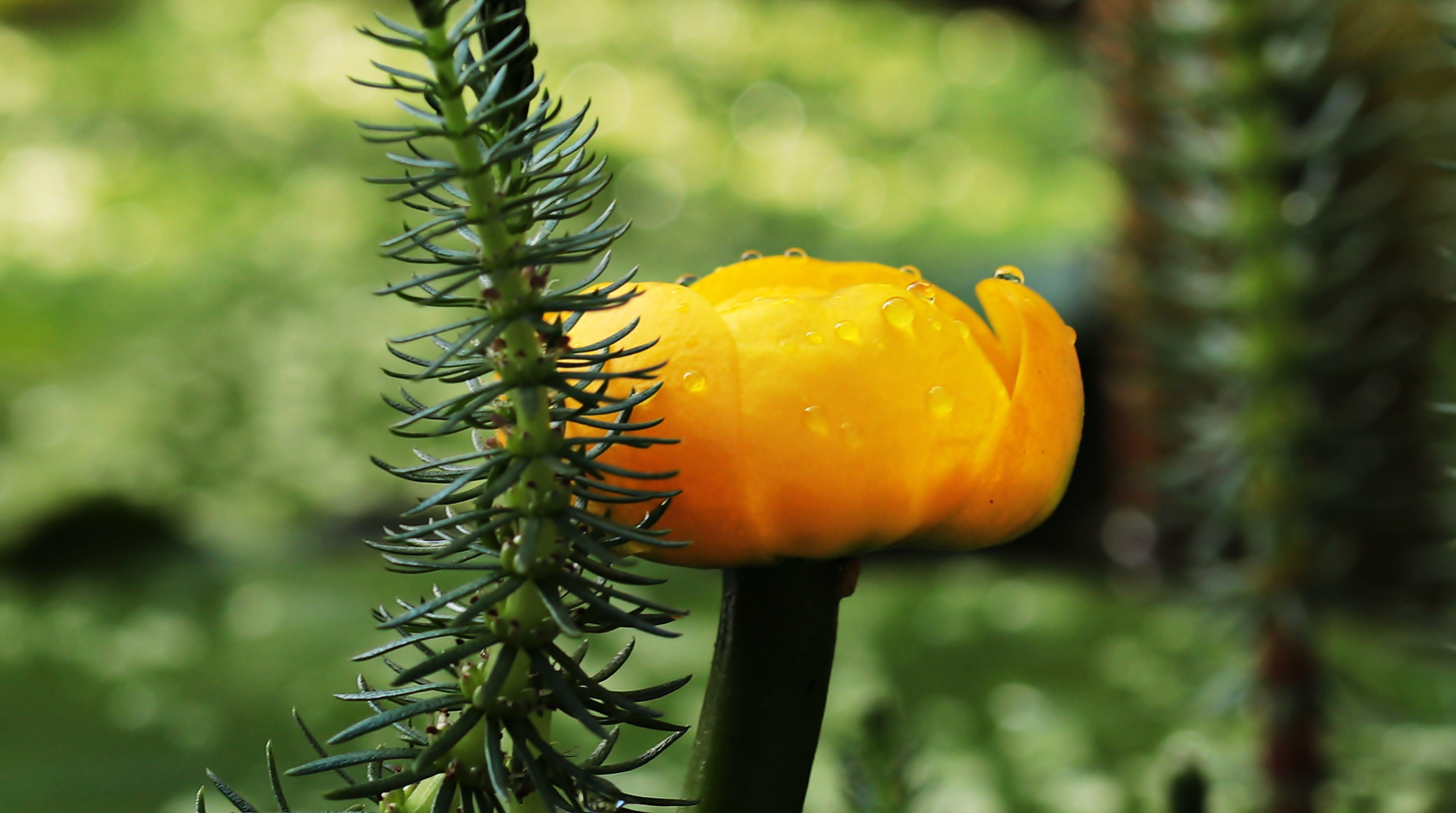 aquatic plant, bloom, blossom