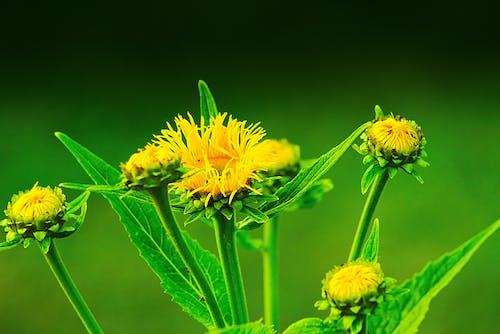 Бесплатное стоковое фото с желтый, завод, лепестки, окружающая среда