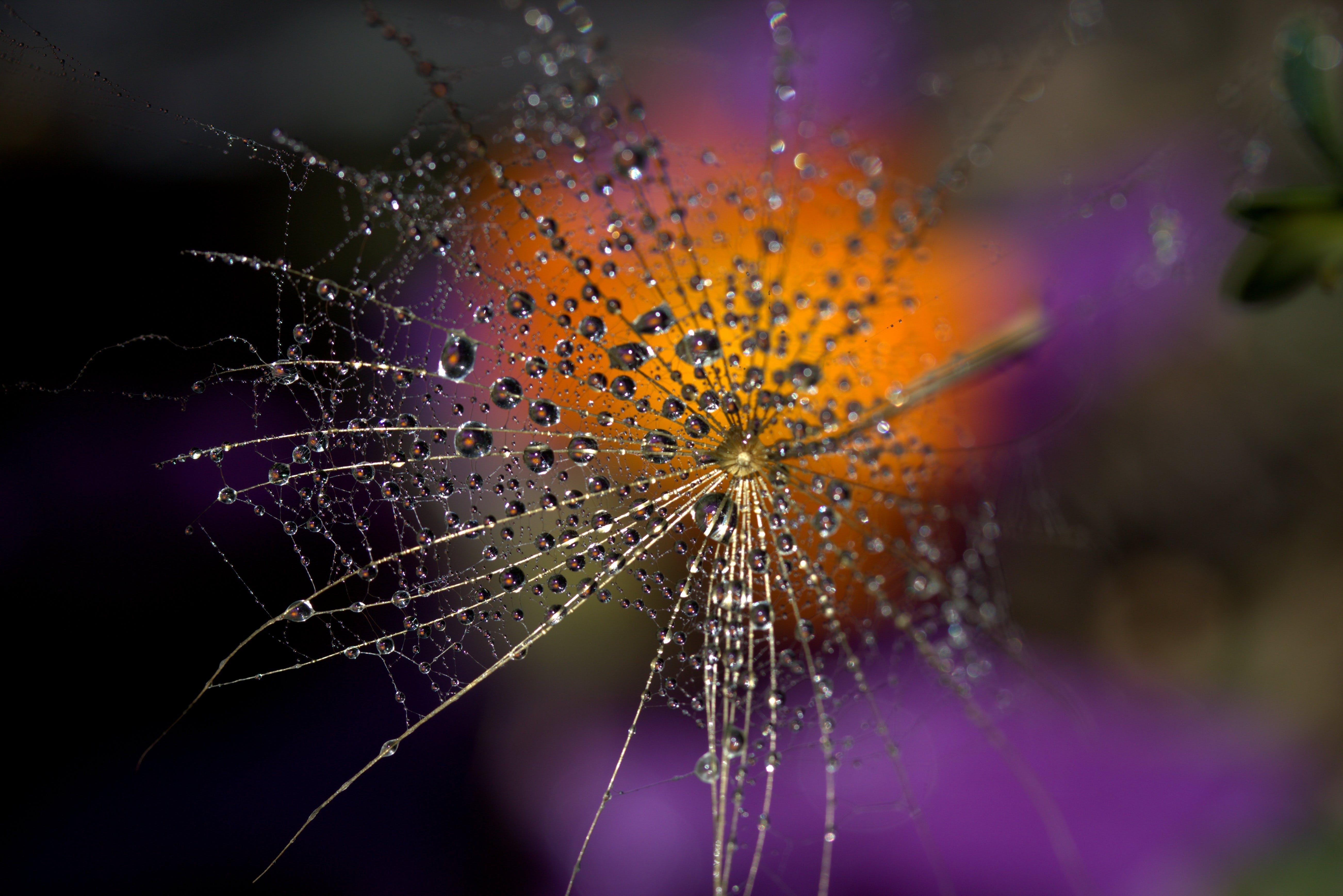 blur, close-up, dewdrops