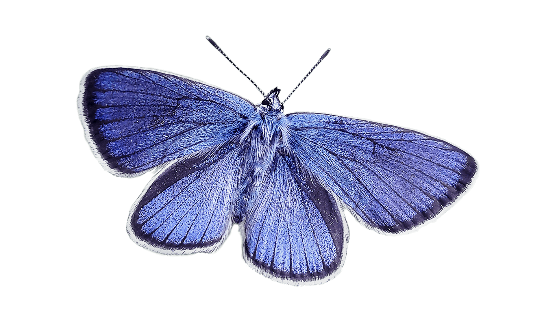 Free stock photo of nature, blue, butterfly, blue wing