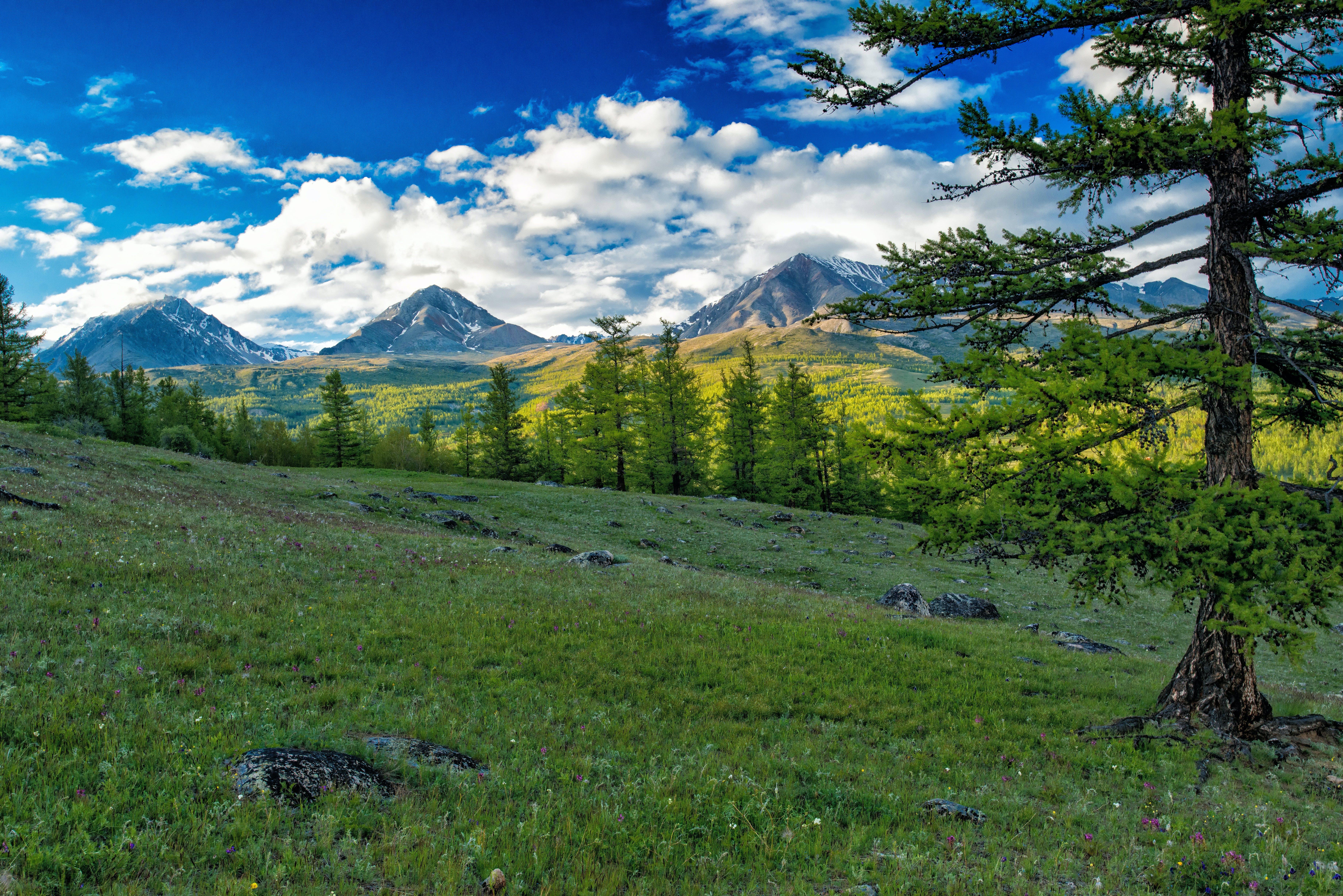 Gratis stockfoto met berg, bomen, conifeer, daglicht