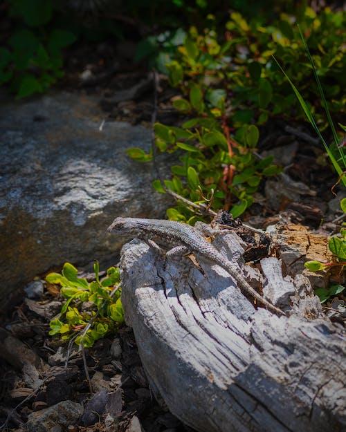 Ilmainen kuvapankkikuva tunnisteilla aita lisko, joki, kallio, kasvikunta
