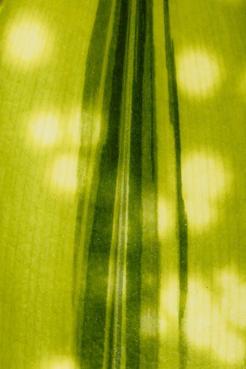 Fotobanka sbezplatnými fotkami na tému botanický, detailný záber, instagram príbeh pozadia, list