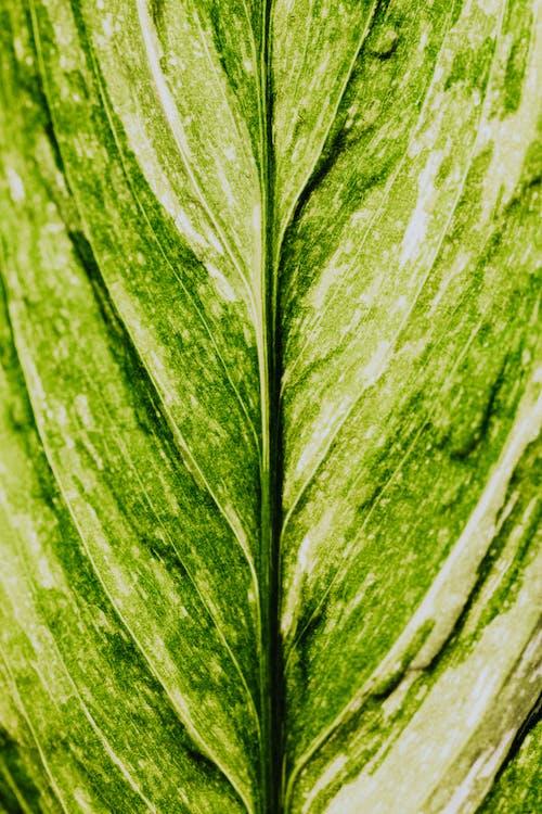 Kostenloses Stock Foto zu abstrakt, blatt, botanisch