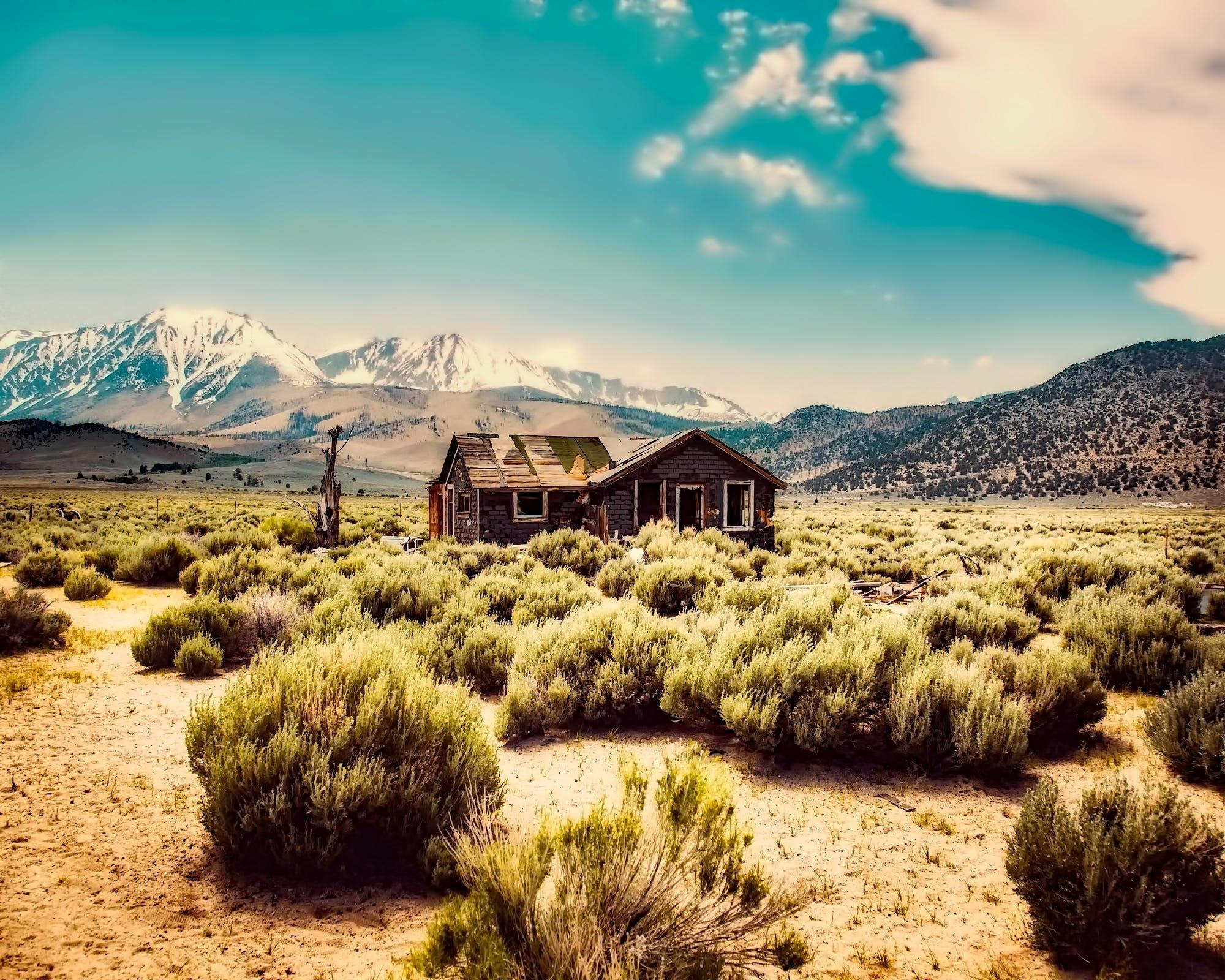 bungalow, bush, cabin