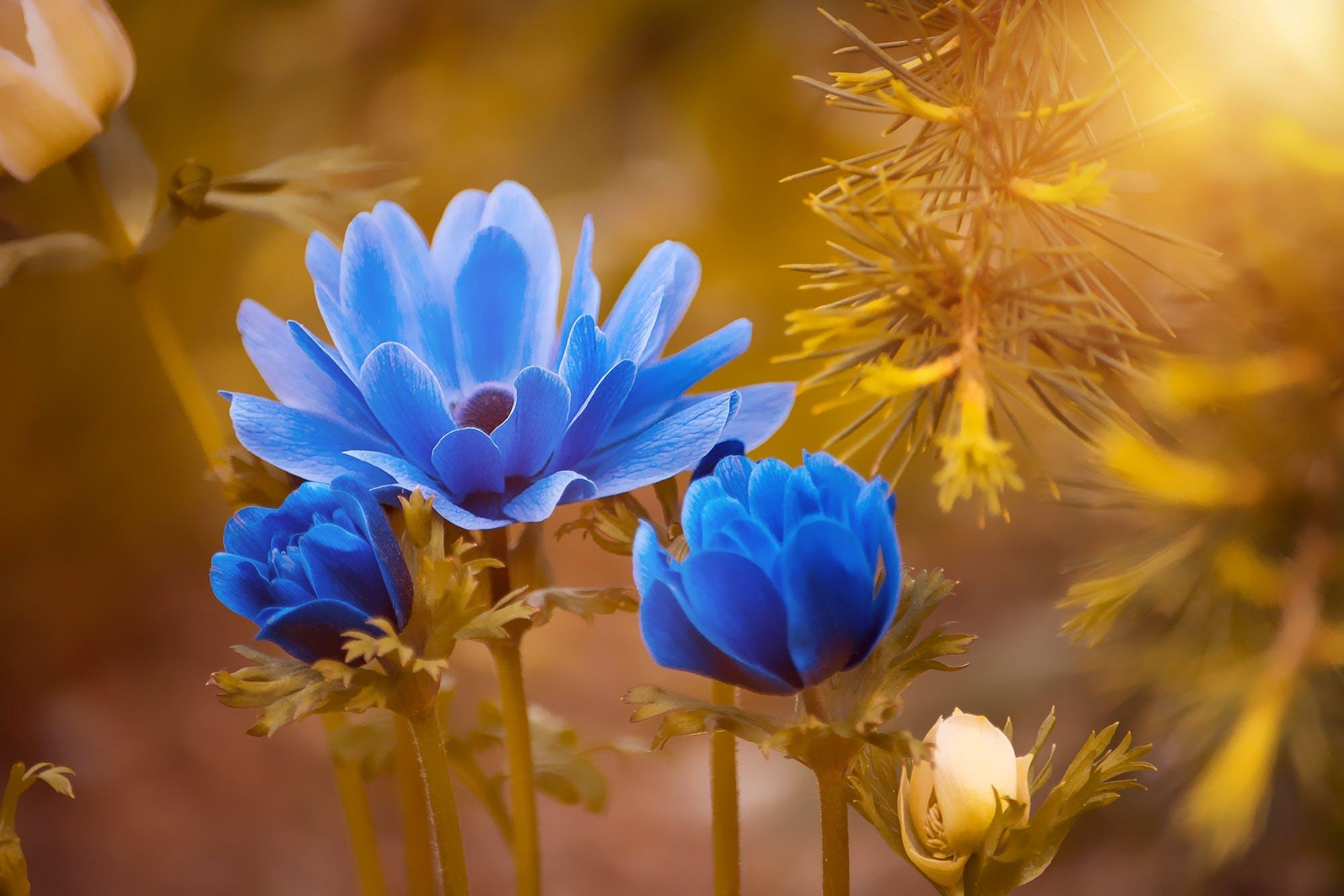 zu blühen, blumen, blüte, blütenblätter