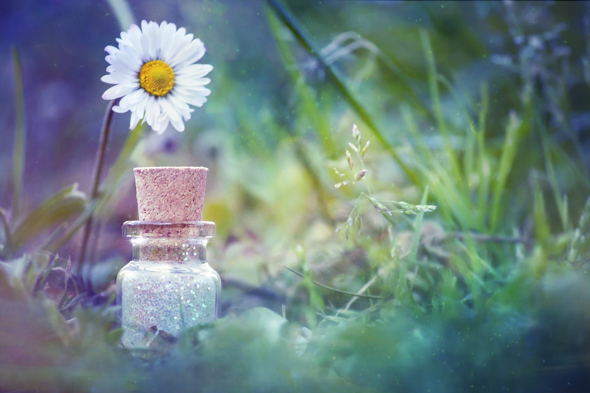 Daisy Flower Beside Bottle