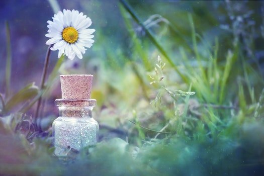 Free stock photo of nature, glass, grass, petals