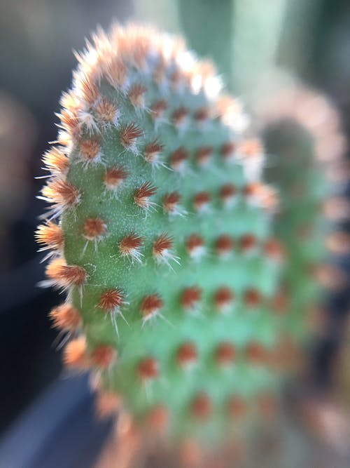 Closeup of green exotic prickly pear cactus growing in garden on sunny day