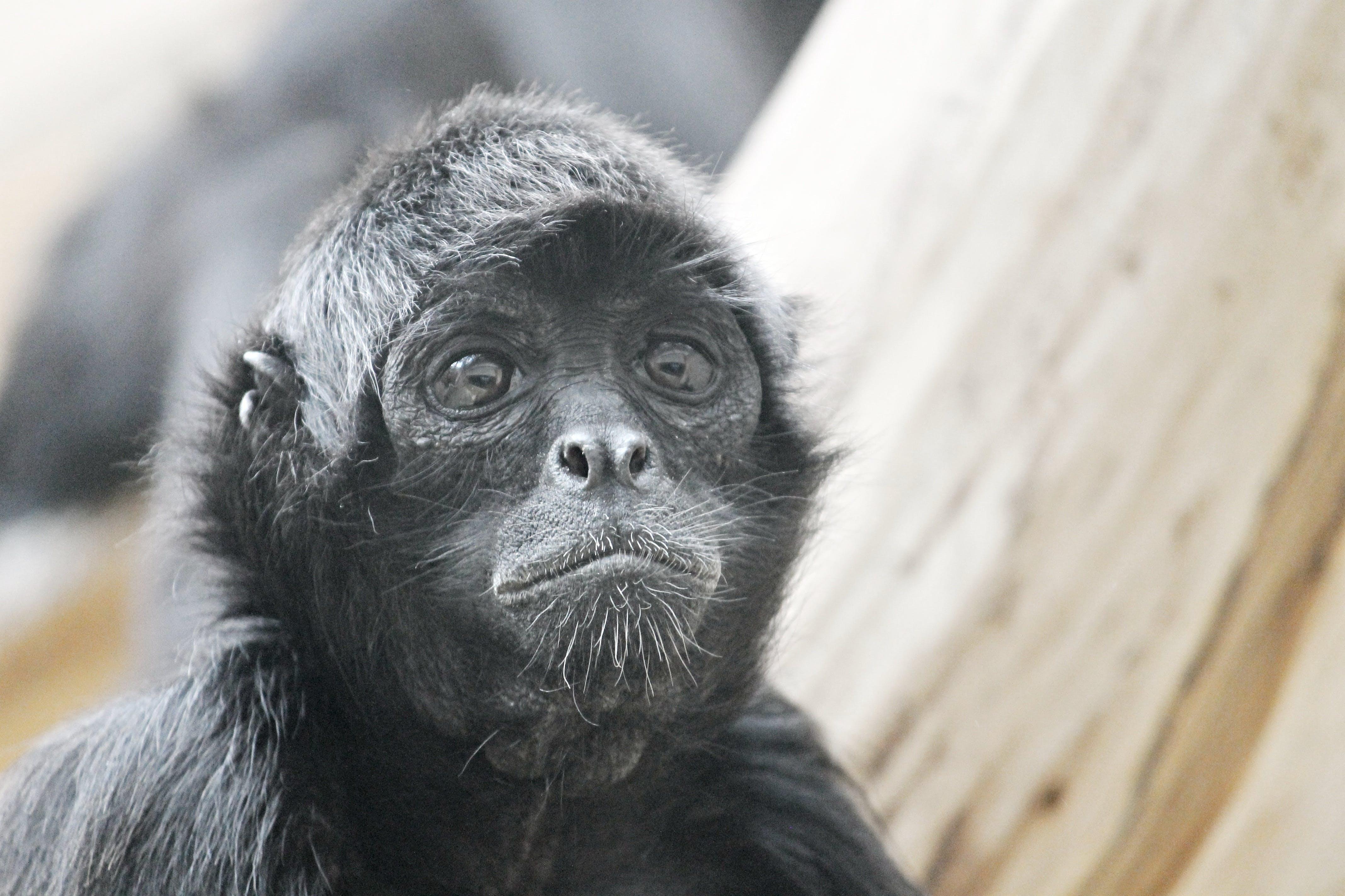 Free stock photo of nature, animal, eyes, zoo